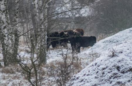 Rezervace divokých koní a praturů_10