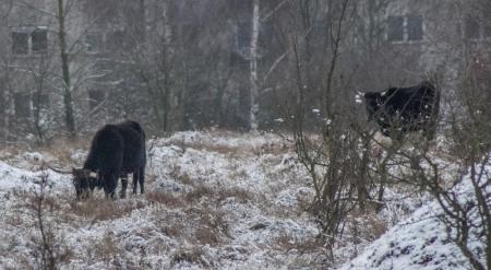 Rezervace divokých koní a praturů_11