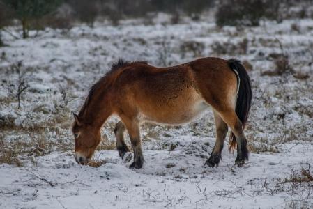 Rezervace divokých koní a praturů_12