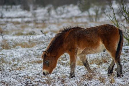 Rezervace divokých koní a praturů_14
