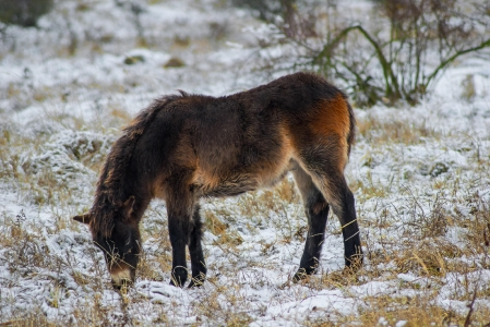 Rezervace divokých koní a praturů_15