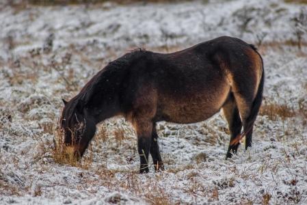 Rezervace divokých koní a praturů_1