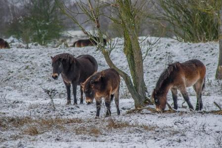 Rezervace divokých koní a praturů_4