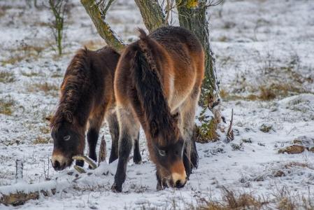 Rezervace divokých koní a praturů_5