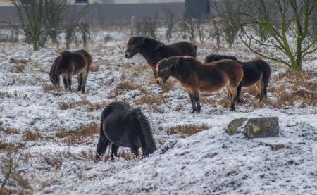 Rezervace divokých koní a praturů_8